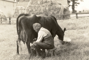 Elv0027  Milking  -  date?